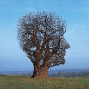 Floyd Tree